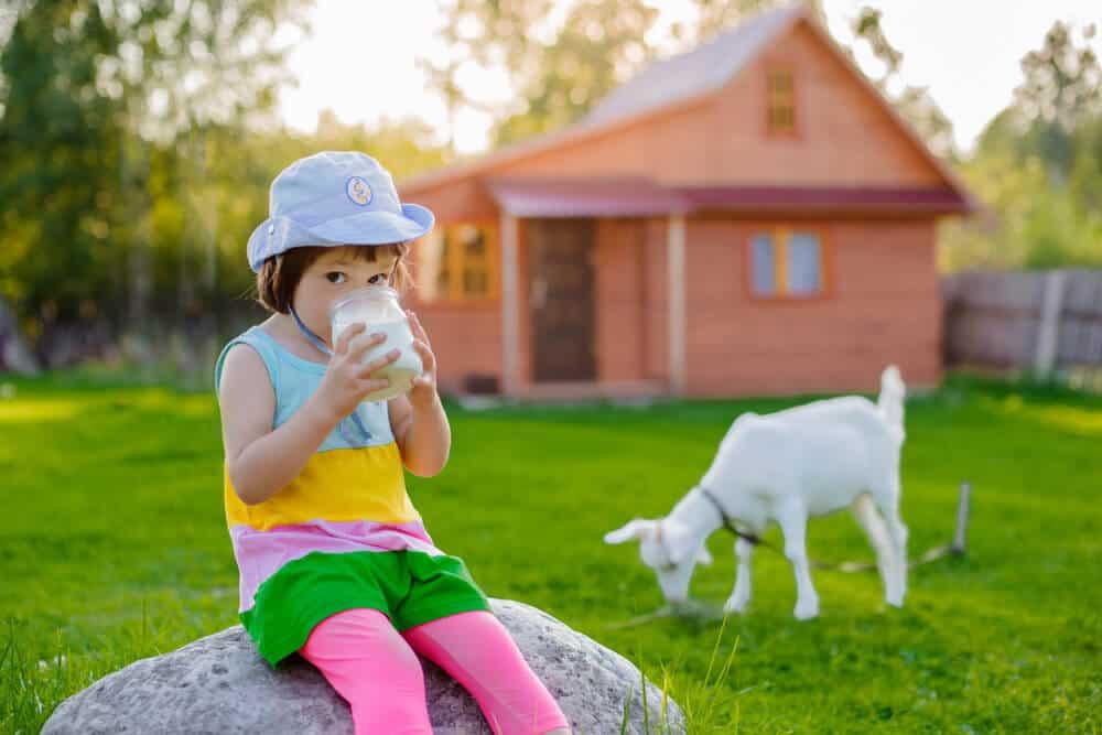 Keçi Sütünü Bebeğinize Ne Zaman Vermelisiniz ?